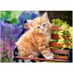 Castorland-018178 Ginger Kitten