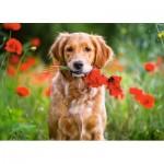 Castorland-018284 Flowers for You...