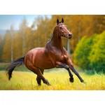 Castorland-018314 Cheval