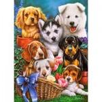 Castorland-030323 Puppies