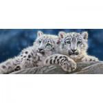 Castorland-060115 Snow Leopard Cubs