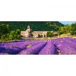 Castorland-060313 Notre Dame de Senanque, France
