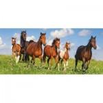 Castorland-060351 Horse Paradise