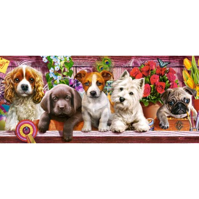 Castorland-060368 Puppies on a Shelf