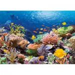 Castorland-101511 Récif de Corail