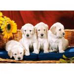 Castorland-101771 Petits chiens dociles