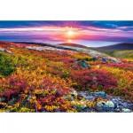 Castorland-103539 Northern Palette