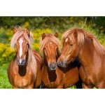 Castorland-103959 Horse Friends