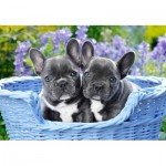 Castorland-104246 French Bulldog Puppies