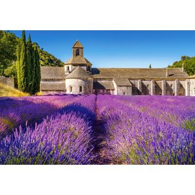 Castorland-104284 Champ de Lavande en Provence, France