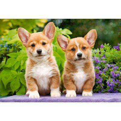 Castorland-104659 Welsh Corgi Puppies