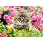 Castorland-111039 Kitten in Flower Garden