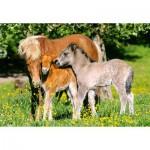 Castorland-12909 Poneys dans la prairie