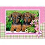 Castorland-13142 Dachshund Puppies