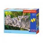 Castorland-13289 Koalas