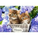 Castorland-151561 Chatons dans les Fleurs