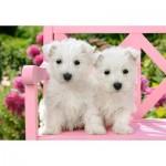 Castorland-151721 White Terrier Puppies