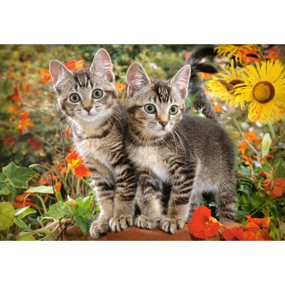 Castorland-151899 Kitten Buddies