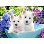 Castorland-222032 Westie Puppies