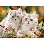 Castorland-222131 Persian Kittens
