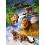 Castorland-27415 Big Cats