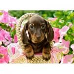 Castorland-27514 Cute Dachshund