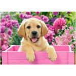 Castorland-52226 Labrador Puppy in Pink Box