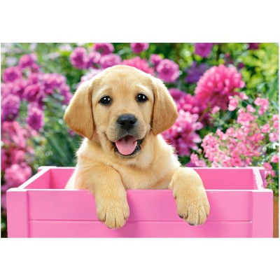 Castorland-52226 Labrador Puppy in Pink Box
