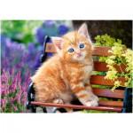 Castorland-52240 Ginger Kitten