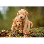 Castorland-52271 Puppy Love