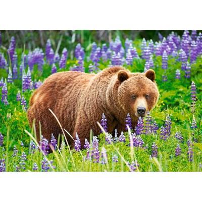 Castorland-52677 Bear on the Meadow