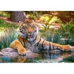 Castorland-52745 Sumatran Tiger