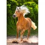 Castorland-52981 Running Haflinger