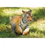 Clementoni-27998 WWF - Tigre