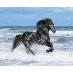Clementoni-30175 Cheval noir