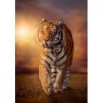 Clementoni-31806 Tigre