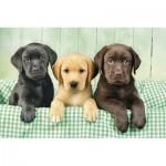 Clementoni-39279 Trois Labradors
