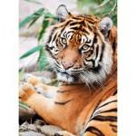 Clementoni-39295 Tigre de Sumatra