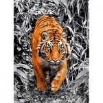 Clementoni-39429 Platinium Collection - Tigre