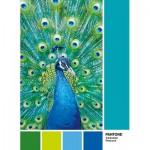Clementoni-39495 Pantone - Peacock Blue