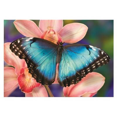 Dino-50249 Butterfly