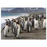 Dino-53283 Penguins