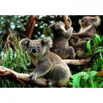Dino-55152 Koalas