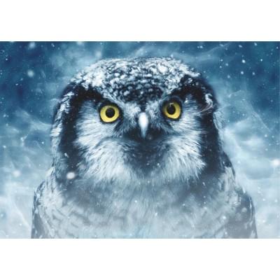Deico-Games-75727 Owl