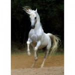 Dtoys-65988 Cheval blanc
