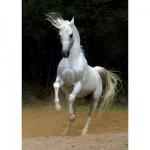 DToys-65988-PH01 Cheval blanc