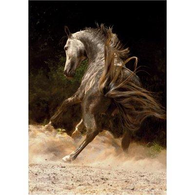 DToys-65988-PH03 Cheval dans la poussière
