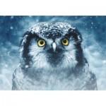 Dtoys-75727 Owl
