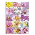Educa-16302 Collage d'Orchidées