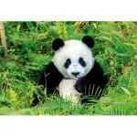 Educa-17082 Panda